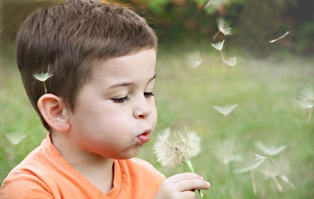 little boy blowing dandelion